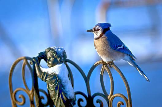 Blue Jay Childs Fence by Randall Branham