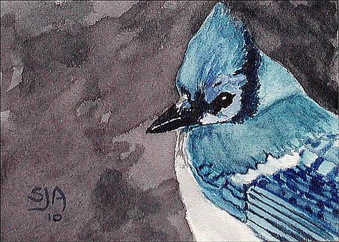 Blue Jay by Scott Alcorn