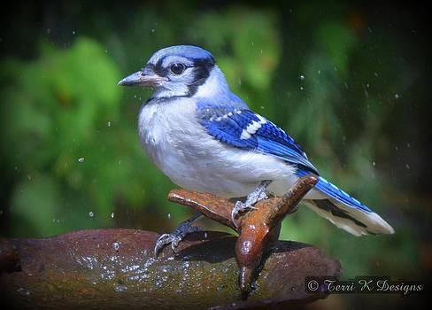 Blue Jay by Terri K Designs