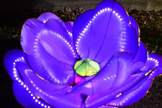 Blue Lotus by Jim Martin