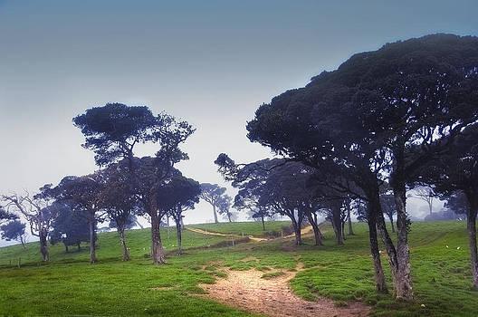 Jenny Rainbow - Blue Mist Silence. Sri Lanka