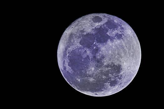 Regina  Williams  - Blue Moon