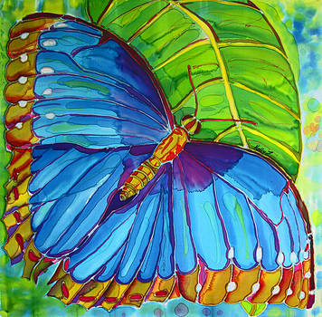 Blue Morpho Butterfly on Zebra by Kelly     ZumBerge