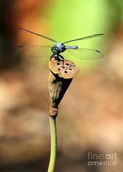 Sabrina L Ryan - Blue Mosquito Hunter