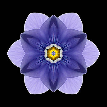 Blue Pansy I Flower Mandala by David J Bookbinder