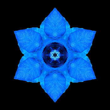 Blue Pansy II Flower Mandala by David J Bookbinder