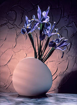 Blue Ribbon Iris by Morocco Flowers Images