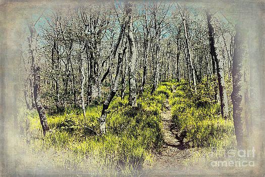 Dan Carmichael - Blue Ridge Mountains Hiking Trail II
