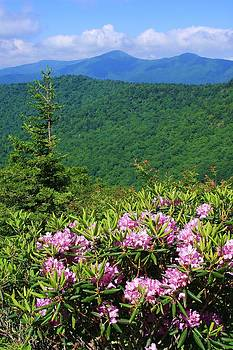 Blue Ridge Parkway near Mount Mitchell by Michael Weeks