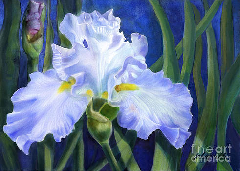 Blue Ruffles by Joan A Hamilton