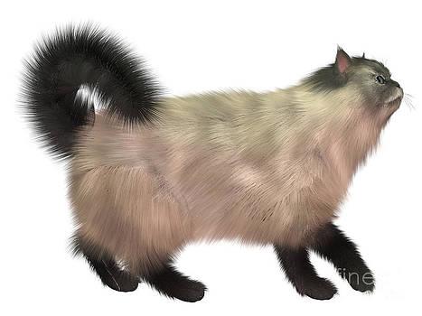Corey Ford - Blue Siamese Cat