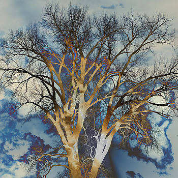 Marty Koch - Blue Sky Tree