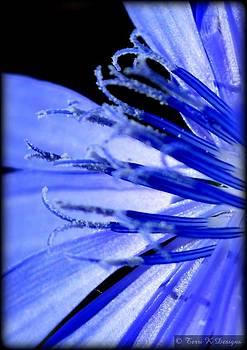 Blue by Terri K Designs