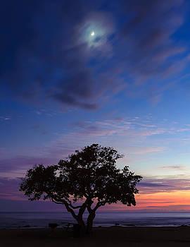 Blue Tree by Kirk Shorte