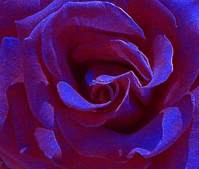 Anne Cameron Cutri - Blue Velvet