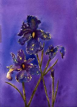 Blue Velvet by Constance Larimer