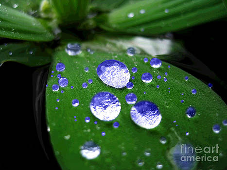 Blue Waterdrops by Karisa Kauspedas