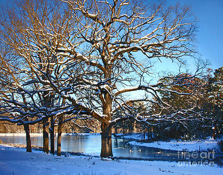 Blue Winter by Pam Carter