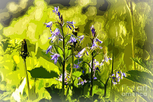Bluebell in a meadow by Anthony Morgan