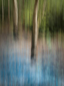 Bluebell Wood by Andy Astbury