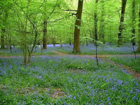 John Tidball  - Bluebell Wood