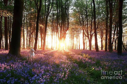 Rabbit in Bluebell Woods by Simon Bratt Photography LRPS