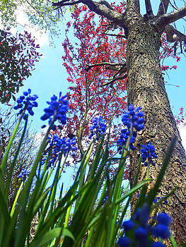 Bluebells by David Valentyne