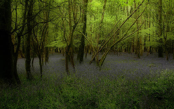 Bluebells dream by Peter Skelton