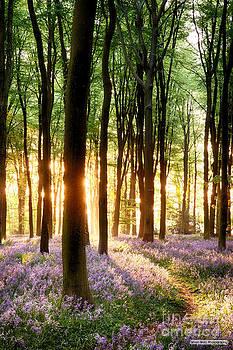 Simon Bratt Photography LRPS - Bluebells in sunrise light