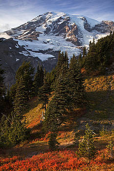 Blueberry Partch at Mt Rainier by Ross Murphy