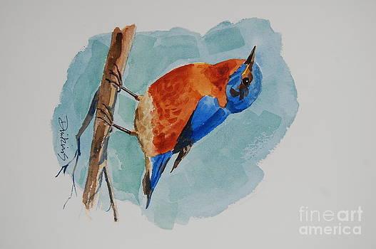Bluebird by Bill Dinkins
