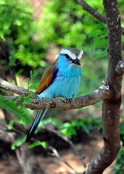 Bluebird by Cherie Haines