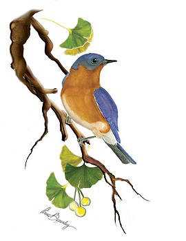 Bluebird in Ginkgo Tree by Anne Beverley-Stamps