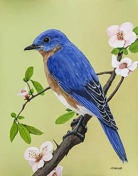 Bluebird by Jim Ziemer