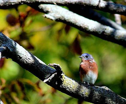 Rosanne Jordan - Bluebird Pretty