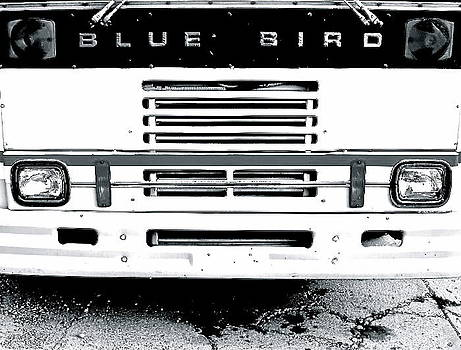 Bluebird by Sarah Leer