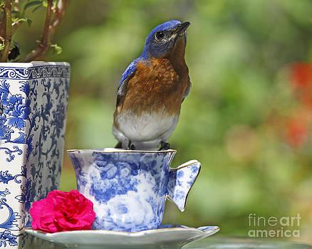 Bluebird Tea Time by Luana K Perez