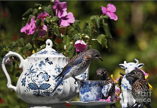 Bluebirds and Garden Tea Photo by Luana K Perez