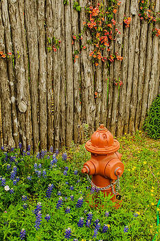 Allen Sheffield - Bluebonnets with Hydrant and Fence