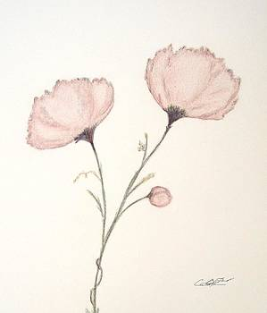 Blush Peonies by Christine Corretti