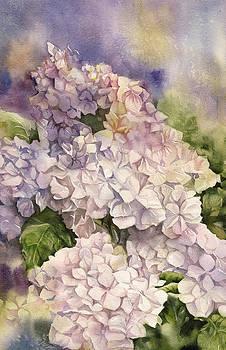 Alfred Ng - Blushing Bride Hydrangea