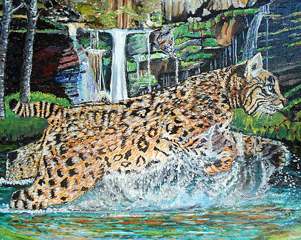 Bobcat On The Hunt by Sandra Wilson