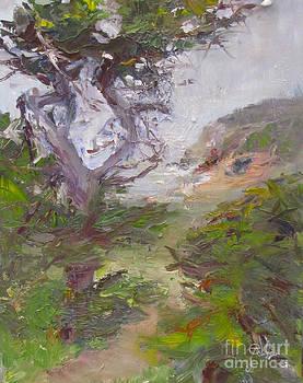 Bodega Head Cypress by Marcy Silveira