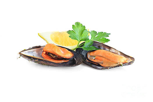 Boiled Mussels  Isolated On White Background by Antonio Scarpi