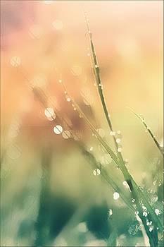 Bokeh Dreams by Anne Macdonald