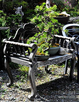 Bonsai Trees on the Vintage Bench by Tanya  Searcy