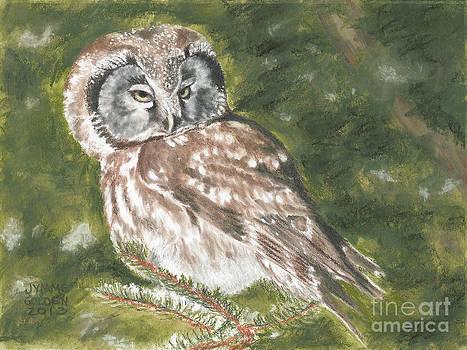 Boreal Owl by Jymme Golden