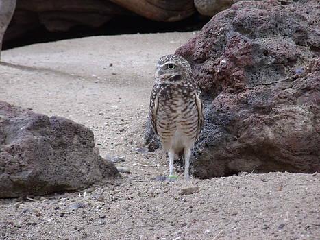 Borrowing Owl by Terrilee Walton-Smith