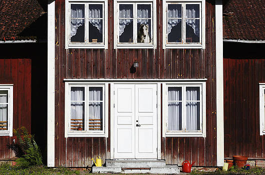 Borzoi Dog In The Window Of Old House by Christian Lagereek