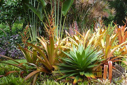 Botanical I by Mark L Watson